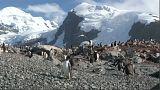 "Greenpeace e il ""santuartio Antartico"""