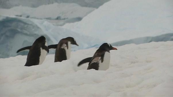 Vast natural reserve proposed for oceans off Antarctica