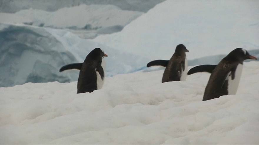 Antarktis: Greenpeace fordert 1,8 Millionen Quadratkilometer Schutzzone für Krill