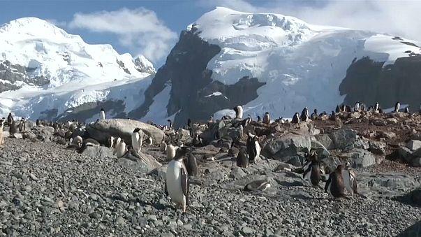 Greenpeace veut sanctuariser l'Antarctique
