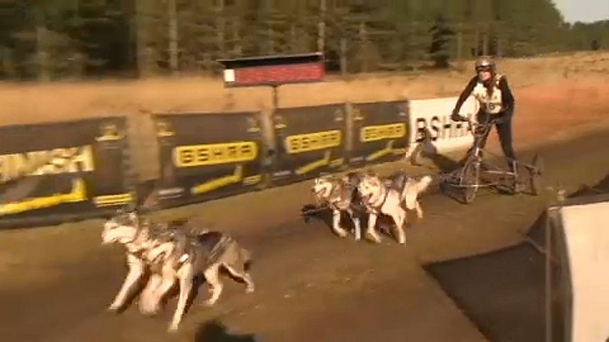 Huskyverseny Nagy-Britanniában