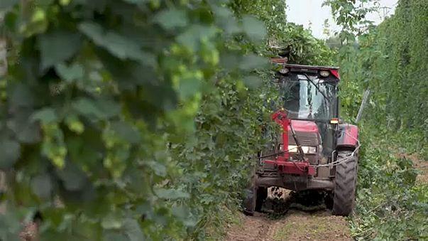 ЕС готовится сократить аграрные ассигнования
