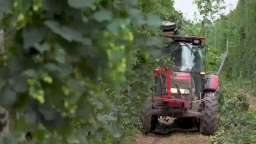 Die Bauern in der EU profitieren von Milliardenhilfen
