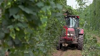Rischio tagli nella politica agricola comune dopo il 2020