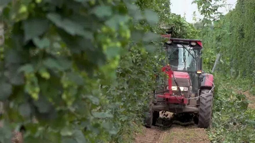 'AB'nin ortak tarım politikası bütçesinde kesintiye gidilebilir'