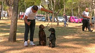 Los perros mexicanos hacen pandilla