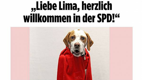 German newspaper registers dog to vote in SPD coalition ballot
