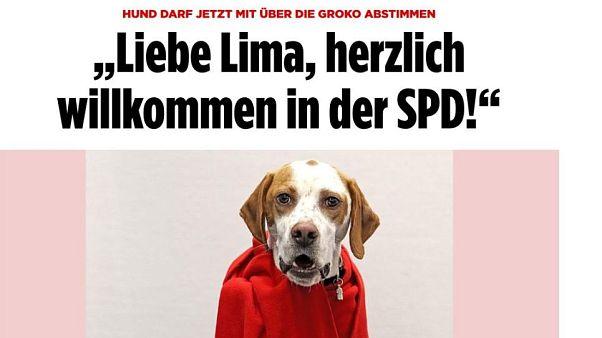 Hund darf jetzt mit über die GRoKO abstimmen
