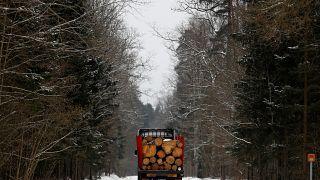 150.000 Urwald-Bäume abgeholzt - Polen droht Niederlage vor EuGH