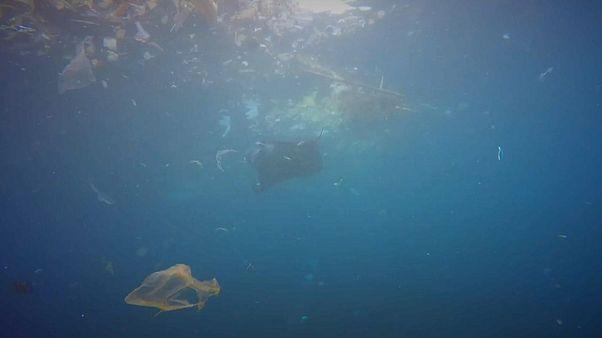 """""""البلاستيك"""" خطر يهدد النظام البيئي في البحار"""