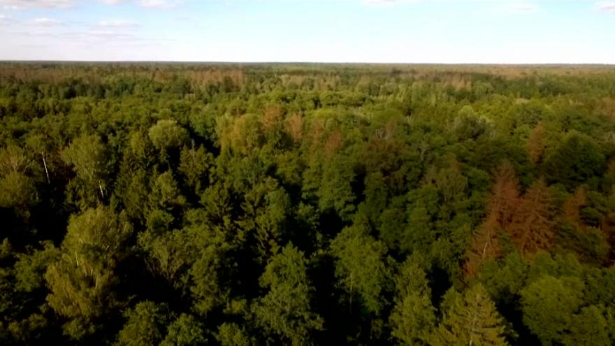 Poland's heavy foresting under scrutiny