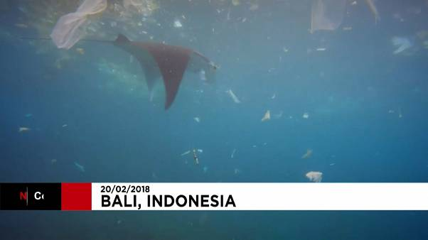 Manta Ray filmed swimming through plastic bags and other rubbish off Bali
