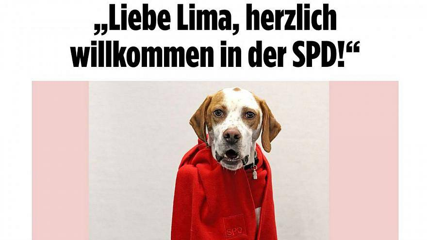 Almanya: Köpeği SPD'ye üye yaptılar
