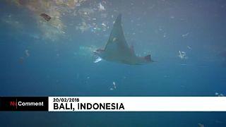 Sokkoló a műanyagszennyezés Bali tengervizében