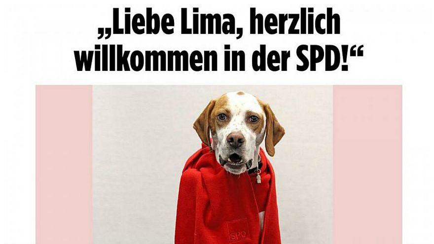 """الكلبة """"ليما"""" تمارس """"حقها الانتخابي"""" وتحدد مصير انضمام الحزب الديمقراطي الاجتماعي للائتلاف الحاكم في ألمانيا"""