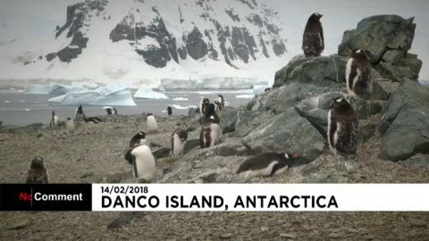 Pingvinek strandja