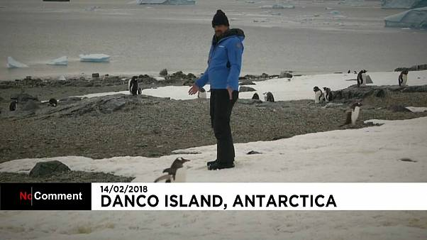 David Harbour with Antarctic penguins