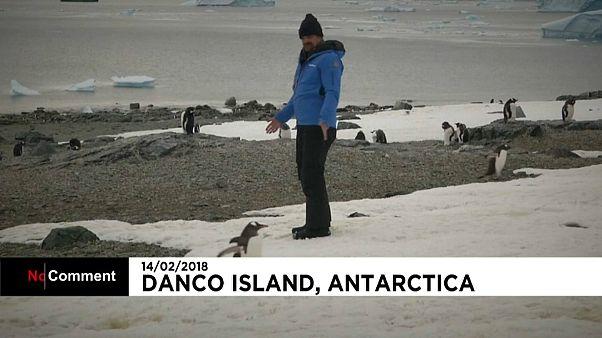 David Harbour with Antarctic penguins