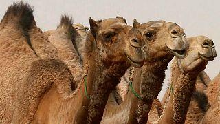 تعرّف على لغز الجمال المنحوتة في السعودية