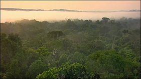 Amazonas-Regenwald könnte zur Savanne werden