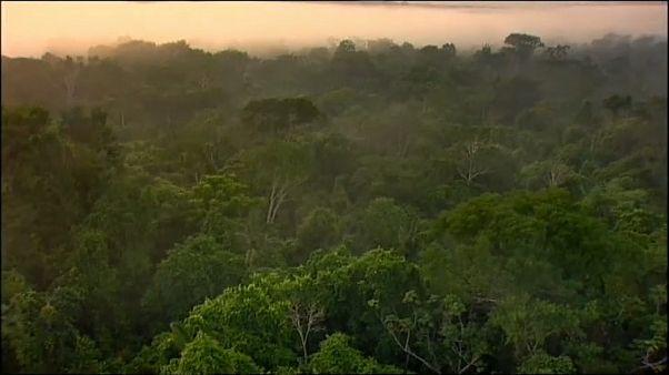 L'Amazonie pourrait atteindre un point de non-retour