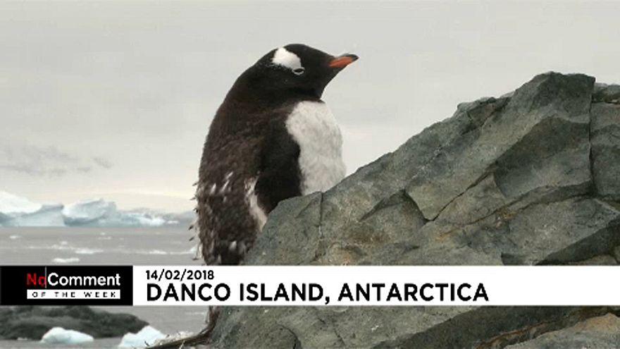Amikor az embert csak a pingvinek látják...