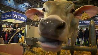 Schnauze voll – französische Bauern pfeifen auf Macron