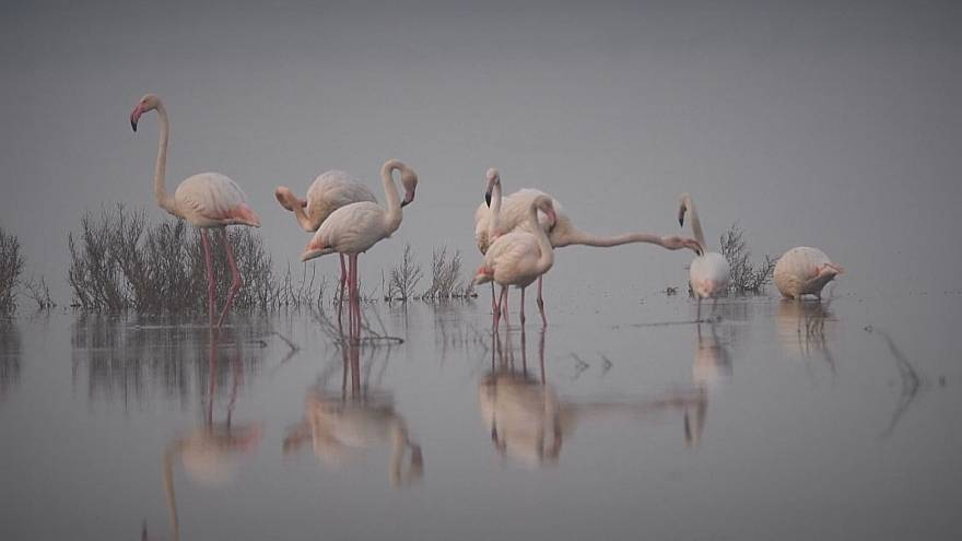 Tanzende Flamingos