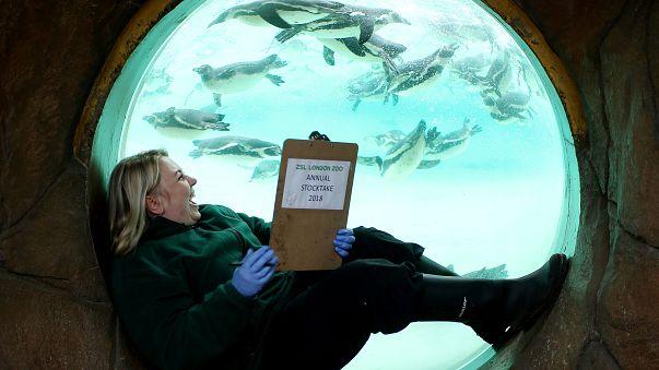 مواطنة بريطانية تقرأ بجوار حوض للبطاريق في حديقة حيوان ZSL في لندن