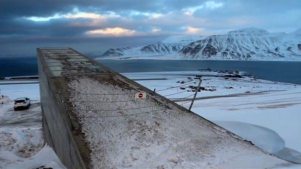 El calentamiento global amenaza las semillas de Svalbard