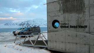 Tíz éves a norvég élelmiszer-génbank