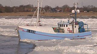 شاهد: قارب صيد يعلق وسط الثلوج في الدنمارك