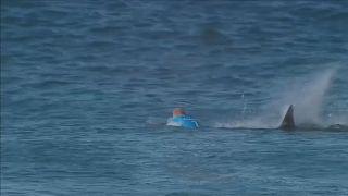 L'uomo che sfidò gli squali