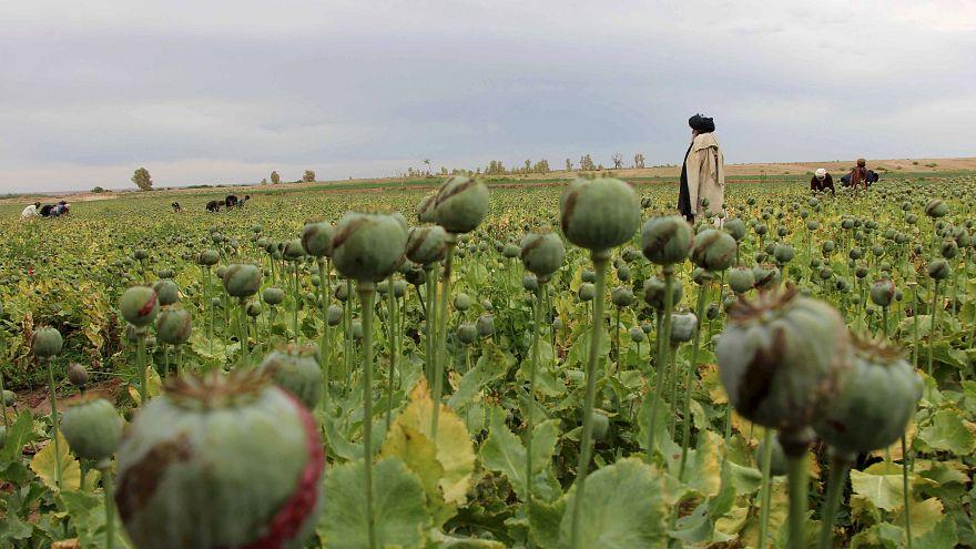 Afghanistan: Kommt mysteriöser Taliban-Kämpfer aus Deutschland?