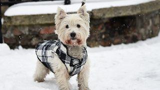 Tiere im Schnee - 5 der coolsten Fotos