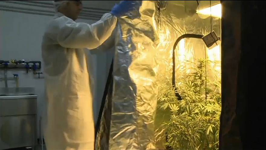 Medical cannabis one step closer to legality in Greece