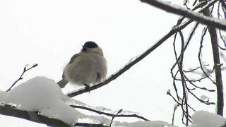 Winter, Winter: Väterchen Frost aus Russland