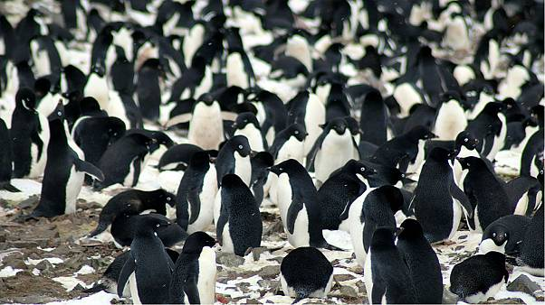 Scientists spot secret penguin 'supercolony' from space