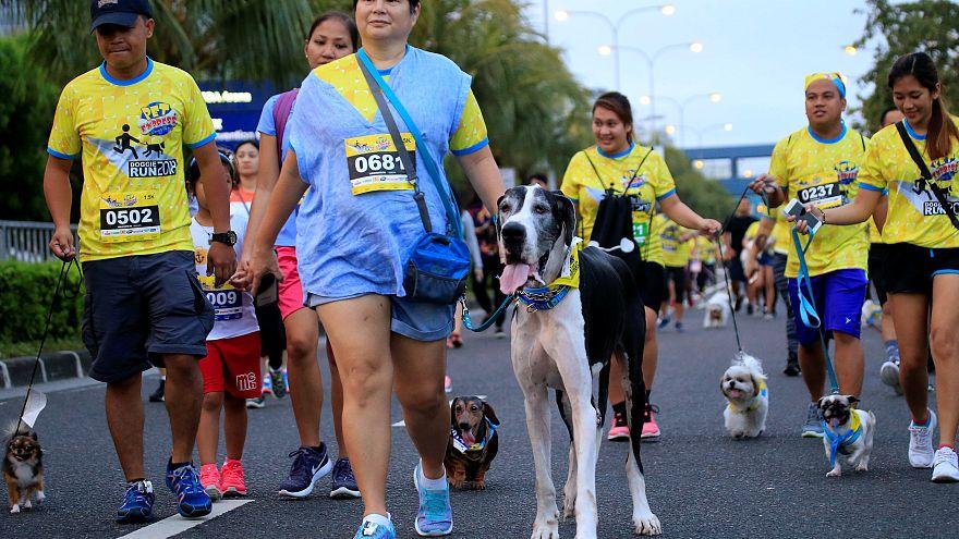 Cães e donos fazem marcha solidária em Manila