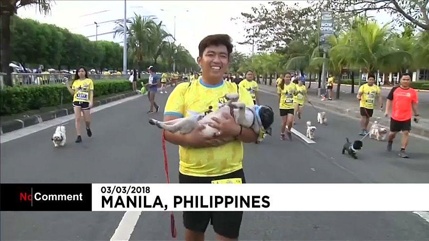 1000 Hunde beim Volkslauf in Manila