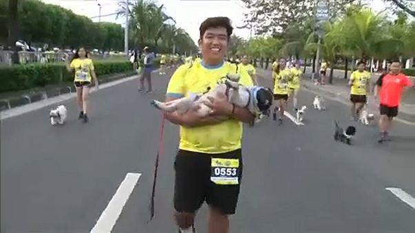 Φιλιππίνες: Αγώνας δρόμου για...φιλόζωους!