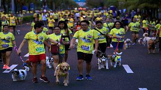 Dog fun run
