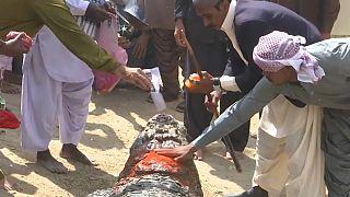 تكريم تمساح في مهرجان الألوان في باكستان