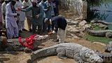 Цветы и сладости для крокодилов