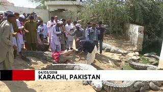 Pakistan crocodile