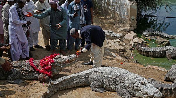 Crocodilos são convidados de festival em Karachi