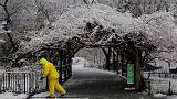 ABD'nin kuzey doğu kıyısını kar fırtınası vurdu