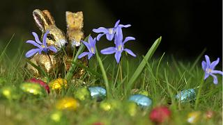 أرنب العيد المصنوع من الشوكولاتة