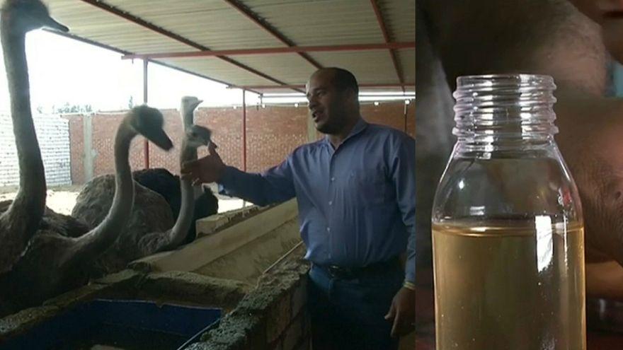 يقول مربون وأطباء إن طيور النعام فيها كنز كله فوائد لصحة الإنسان