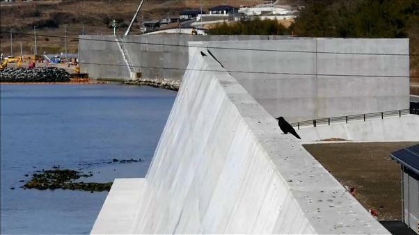 """7 Jahre nach Fukushima: Tepcos """"Eiswand"""" ist undicht"""
